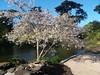 (sftrajan) Tags: goldengatepark botanicgarden strybingarboretum sanfranciscobotanicalgarden jardinbotanique jardimbotânico jardínbotánico botanischergarten ботаническийсад