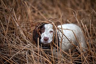 A New Born Lamb .... nope its Rupert!