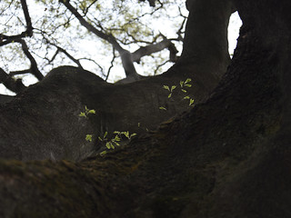 Breath on old trees