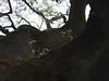 Breath on old trees (k-o-m-a-n-e-k-o) Tags: nikon d750 healing sacred tree shrine winter takasaki gunma pottering 神木 癒し 木 神社 境内 緑 葉 群馬 ポタリング fresh verdure leaf 新緑 若葉 trunk 幹