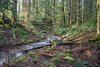 A Rainbow of Greens (writing with light 2422 (Not Pro)) Tags: creek logs ferns moss trees muck mud sunrise landscape richborder sonya7 zeiss green arainbowofgreens washingtonstate greatdaytonotbeatwork