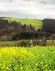 Verdes galegos (www.webdejaime.com) Tags: verdes galicia galiza campo