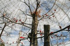 water birds (Maluni) Tags: valencia spain espana spagna acquarium birds uccelli