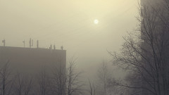 (decemberGirl.) Tags: fog morning sun sunrise trees branches wires buildings 50mm