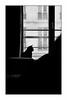 Paris (Punkrocker*) Tags: leica m2 konica hexanon m 50mm 502 film kodak trix 400 nb bwfp city dog cat home paris france