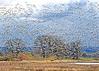 Raining Geese (Gary Grossman) Tags: geese flock birds nature force awe marvel landscape marsh wetland oregon garygrossmanphotography snowgeese waterfowl winter wildlife wild sauvieisland pacificnorthwest trees oaks clouds dark sky