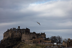 EPMG Edinburgh Cityscapes March 2018-17 (Philip Gillespie) Tags: edinburgh scotland scottish city march 2018 spring buildings architecture scape view roofs chimneys steam trees birds pigeons seagulls views castle ancient museum history sun clouds sky mountains hills churches cathedral people nature mono monochrome black white colour color blue red green yellow orange grey purple wildlife urban canon 5dsr framing framed