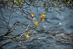 Water Colours (Franklin Vincentie) Tags: water trees leaves tasmania australia cradlemountain branches dovelake