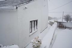DSC_7997 (seustace2003) Tags: baile átha cliath ireland irlanda ierland irlande dublino dublin éire glencullen gleann cuilinn st patricks day zima winter sneachta sneg snijeg neve neige inverno hiver geimhreadh