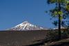 Teide (inma F) Tags: chinyero garachico arbol comtf excursion excursión lava paisaje teide volcan vulcano mountain tenerife snow winter invierno black