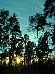 [ In your heart, you've been given the power to dispel all darkness ] (Chris Séhenna) Tags: soleil sun sol forêt forest bosque arbres trees árboles crépuscule sunset puestadelsol rayons rays rayos