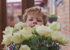 77 ~ 365 (BGDL) Tags: lightroomcc nikond7000 no bgdl afsnikkor50mm11 no6~3652018 babyjames niftyfifty kitchen roses bouquet smelltheroses