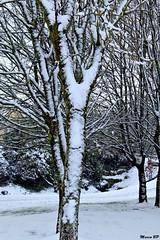 Photos Marco BP (29)_GF (marcbihanpoudec) Tags: bretagne neige plabennec plan deau lac banc arbres