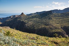 Gomera_160410_4919 (Raico Rosenberg.com) Tags: kanarischeinseln traumlandschaften canaryislands islascanarias vallegranrey photography rainforest laurisilva naturaleza landschaft farobeach fotografia fotografie landscape lagomera garajonay staircase sunshine holydays national vacation seascape tropical wildlife atlantik atlantic españa volcano lucroit islands reserve ecology outdoor foliage spanien paisaje vulkan summer vulcan merkel nature hitech wasser piedra canary hiking wellen forest imagen gomera plant stock photo stein spain natur waves water ozean image ocean green cedro bild foto walk fern park wood leaf agua dirt moss meer rock
