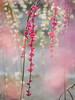 * (t*tomorrow) Tags: panasonic lumix gx8 100400mm plum flower 梅