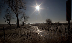 Morning Frost (sarasonntag) Tags: march 2018 sandhill crane farmer fields nebraska kearney frost morning sun migration spring platte river fly over distance outdoor water