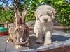 Happy easter! :) (Torok_Bea) Tags: easter bunny nyúl húsvét kellemeshúsvétot puli pulidogs cute dog dogs kodak animals nyuszi happyeaster rabbit