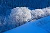 IMG_4779 (Bartek Rozanski) Tags: badenwurtemberg oberried schwarzwald germany blackforest deutschland mountains winter hochschwarzwald snow frost tree hill