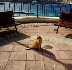 Malta (JMG-Photos) Tags: chat bancs malta