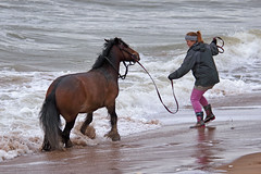 Bring Your Horse to the Beach (markkilner) Tags: canon eos 80d dslr kent england kilner televue tv60 televue60 manualfocus telescope apo primefocus jossbay broadstairs northforeland coast beach surf horse thanet