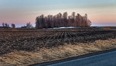 La dernière trace de neige? (Vincent Rowell) Tags: raw photoshopped tonemapped saintvalentin agriculture cornfield field landscape sunset spring trees explore