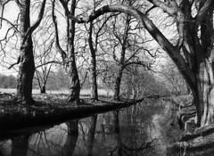 Nive Å (LarsHolte) Tags: pentax 645 pentax645 645n 6x45 smcpentaxa 35mm f35 120 film 120film foma fomapan fomapan100 fomapan100professional 100iso mediumformat analog analogue blackandwhite classicblackwhite bw monochrome filmforever ishootfilm filmphotography xtol homeprocessing larsholte denmark danmark stream nivå niveå trees