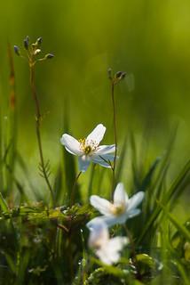 Spring - Lente