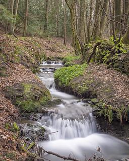 Waterfall in Gibside Woods