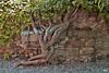 Púbol. Detalles.... (svet.llum) Tags: púbol catalunya cataluña castillo galadalí planta verano naturaleza árbol