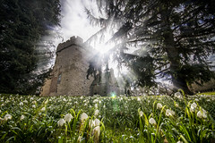 """snowdrops gleam in spring sunshine flooding the Old Tower and gates of Drum Castle, Aberdeenshire, Scotland (grumpybaldprof) Tags: aberdeenshire scotland uk """"drumcastle"""" castle house gardens woodlands """"nationaltrust"""" """"nationaltrustforscotland"""" walls windows turrets towers colour sky roses """"rosegarden"""" """"williamdeirwyn"""" 1325 """"robertthebruce"""" """"clanirvine"""" spring sunshine sun snowdrops flowers light sunlight fortress canon 7d """"canon7d"""" sigma 1020 1020mm f456 """"sigma1020mmf456dchsm"""" """"wideangle"""" ultrawide tower gates oldtower"""