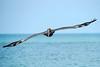 Brown Pelican Incoming (BernieErnieJr) Tags: brownpelican pelican shorebird bird wildlife sonya9 sonyfe100400mm greatphotographers teamsony bernie duhamel ocean sea waves gulfofmexico naples naplesbeach