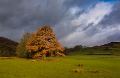 Orange tree (Phil-Gregory) Tags: national naturalphotography naturephotography nationalpark naturalphotograph nikon d7200 tokina 1120mmproatx11 wideangle ultrawide colours colour countryside tree light clouds peakdistrict green orange scenicsnotjustlandscapes landscapes