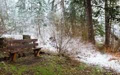 Front Row Seating (John Westrock) Tags: nature winter bench trees forest snow snowing washington pacificnorthwest easton canoneos5dmarkiii canonef2470mmf28lusm