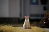 cat (428sr) Tags: nikon neko 猫 ねこ