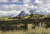 Unfolding Scenery (Hubert Streng) Tags: guanaco lama torresdelpaine patagonia chile snow pampa scenery