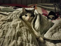 Kewpie: A Chilly Night (Tabo Kishimoto) Tags: kewpie gato neko chat popoki gatto chilly
