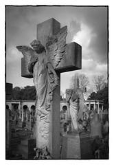 Brompton Cemetery - LDN 2018 (Spaceopera) Tags: cemetery cimetiere graveyard ange angel nikon nikond610 nb zrt funeral art