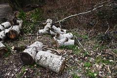 DSC_8955 (PeaTJay) Tags: nikon england uk gb royalberkshire reading winnersh flowers plants trees bushes