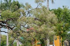 台南公園 (Babbychen) Tags: a6500 sony ilce6500 tainan taiwan 台南