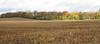 Ohio Sunshine (PDX Bailey) Tags: ohio field corn grass tree sky autumn fall usa america landscape clouds cloud