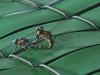 Dragonflies' love (ntnlsk) Tags: méxicocity méxico dragonfly couple green park pond macro libélula