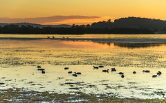 Dawn Waterscape with Ducks and Pelicans (Merrillie) Tags: daybreak woywoy landscape nature australia foreshore newsouthwales earlymorning nsw brisbanewater morning dawn coastal water sky waterscape sunrise centralcoast bay outdoors
