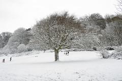 Primley Park in the Snow (iii) (Ray. Hines) Tags: pentaxk5 smcpentaxda18135mmf3556edalifdcwr snow tree white primleypark paignton devon