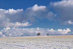 En hiver (Croc'odile67) Tags: nikon d3300 sigma contemporary 18200dcoshsmc paysage landscape nature ciel cloud sky nuage neige snow hiver winter