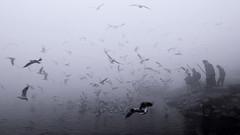 Varanasi in the Morning Mist (pallab seth) Tags: varanasi people morning gulls boat river ganga banaras benaras india ganges asia winter fog mist travel