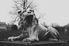 Lion greetings (Insher) Tags: sculpture statue copenhagen kobenhavn denmark danmark rosenborg castle