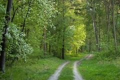 Czarny Staw (Kosmi88) Tags: nikon polska poland las forest pond staw wspacer walk d5300 drzewa reflection odbicie woda forrest spring wiosna 2018 zieleń green