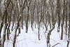 1PRO_7564 (Radu Pavel) Tags: fotononstop radu radupavel pavel ©radupavelallerechtevorbehalten ©radupaveltodoslosderechosreservados ©radupavelallrightsreserved cosmos winter nature trees landscape landschaft natur naturaleza paisaje bäume árboles invierno snow schnee nieve 2018 冬 雪 木 spring primavera frühling 春