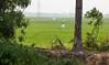 A rice paddy field by the Kerala Backwaters (amanda & allan) Tags: india alleppey kerala riceboat riceboats palmtrees palms backwaters veniceoftheeast rice paddyfield