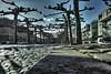 veelaan treeline (eyeamsterdam) Tags: treeline platanen pavement wideangle amsterdamoost easterndocklands bobpieck perspective people loverslane amsterdamstreet sigmadp2merrill